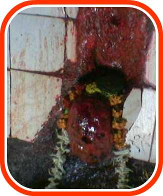 ShaniMaharaj