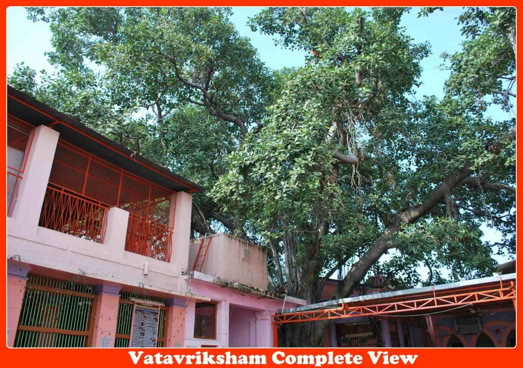 Vatavruksha Mandir , Akkalkot
