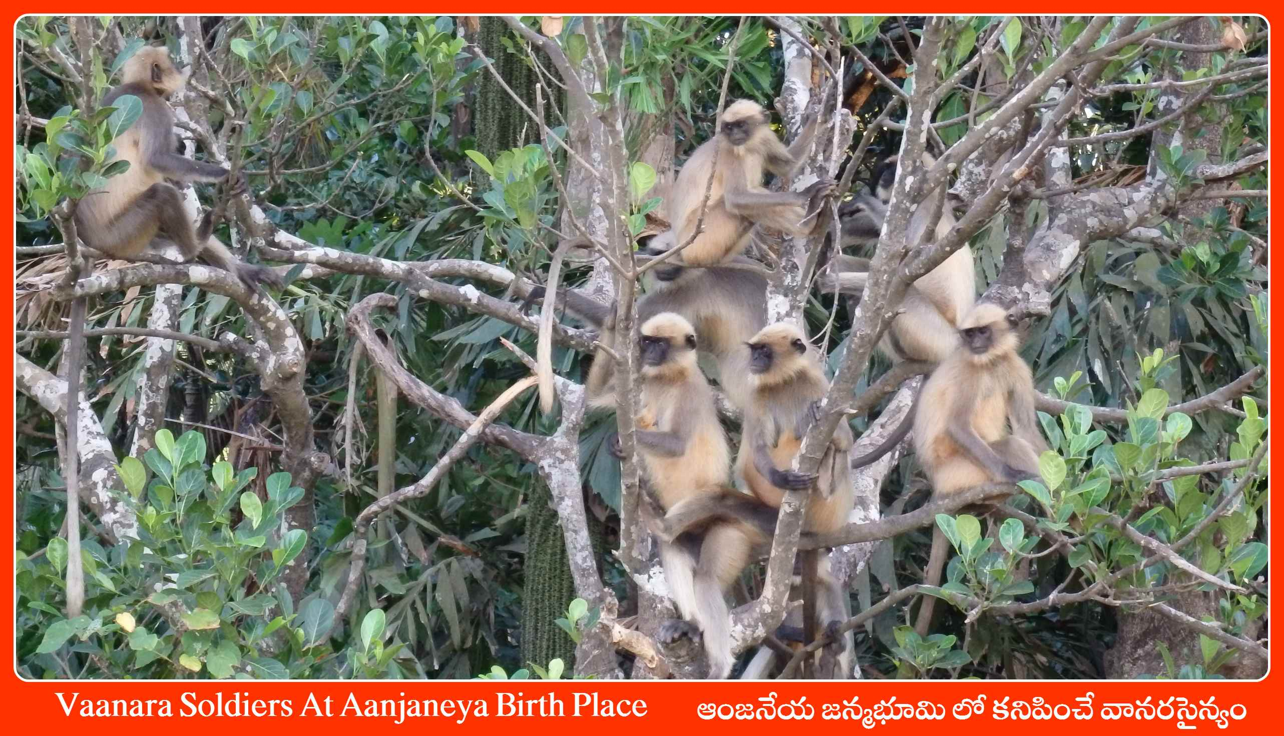 Vaanara Soldiers At Aanjaneya Birth Place - Gokarna